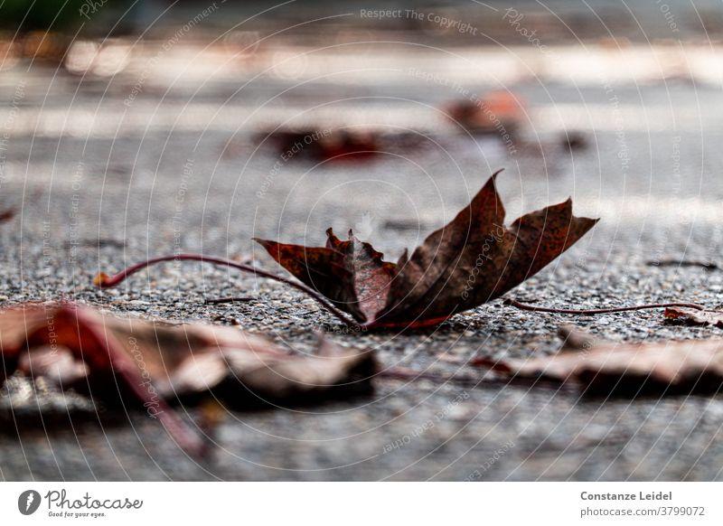 Herbstliche, verwelkte Blätter auf der Straße Herbstlaub November Oktober Nasse Straße Asphalt regnerisches Wetter Rutschgefahr rutschig Novemberstimmung Nebel