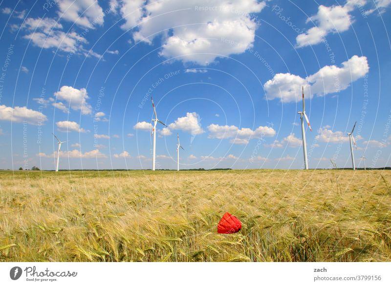 Feldstudie Landschaft Energie Landwirtschaft Erneuerbare Energie Energiewirtschaft Windkraftanlage Energiekrise Wolken Blume Pflanze Schönes Wetter Blüte