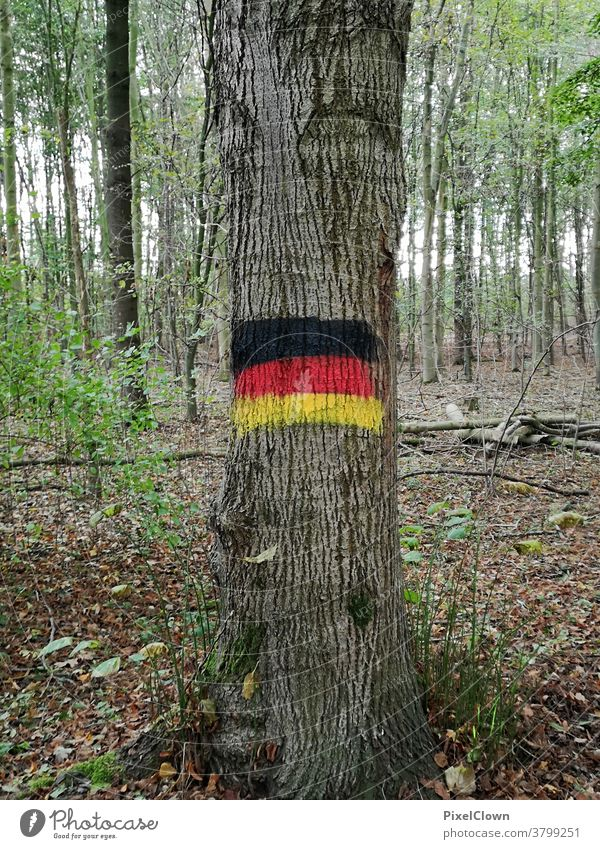 Deutscher Wald Baum Baumstamm Herbst Natur Außenaufnahme Menschenleer Landschaft Deutschland, Flagge, Waldlichtung, Laub