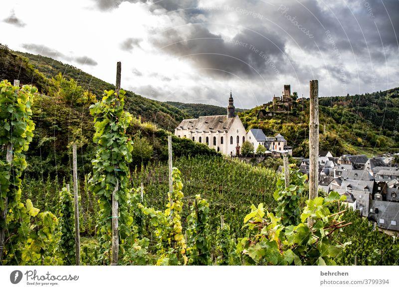 klosterwein Hunsrück Moseltal Sonnenlicht Mosel (Weinbaugebiet) Flussufer Wege & Pfade Idylle Ruhe Rheinland-Pfalz Weinstock Weinrebe Weintrauben Weinberg