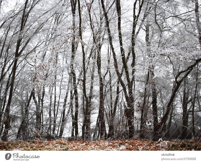 Wald mit vereisten Bäumen und Laub wald winter schnee herbst reif stamm zweig blatt laub kalt kälte weihnachten lockdown himmel