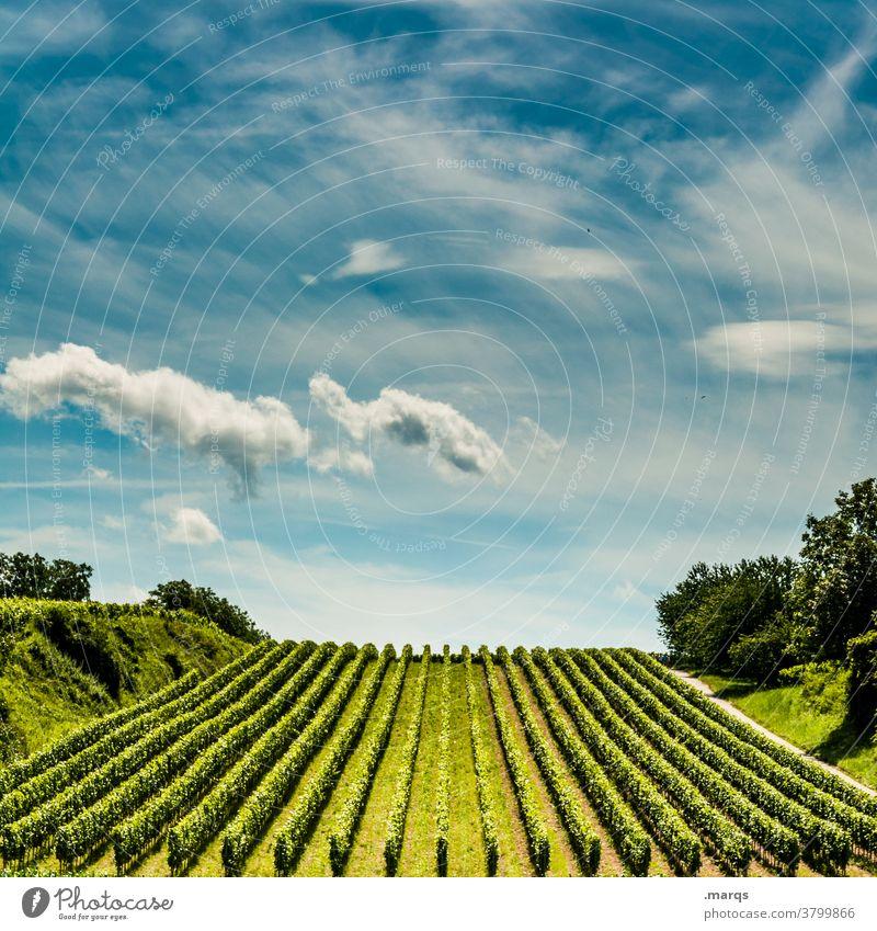 Weinbau Weinberg Weinrebe Kaiserstuhl Sommer Schönes Wetter Himmel Horizont Linie