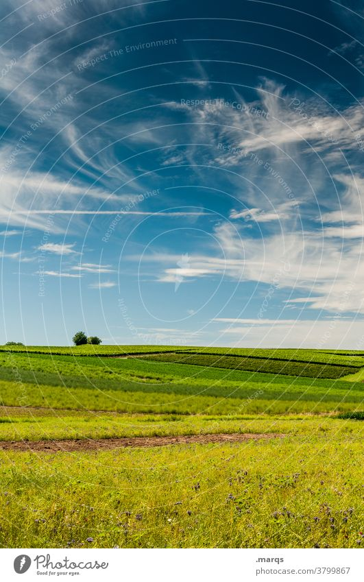 Feld Sommer Himmel Schönes Wetter Acker Landwirtschaft grün gelb Landschaft Natur Baum Horizont Cirrus