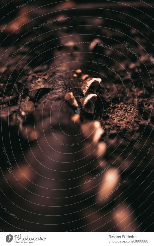 Pilzreihe wächst an einem am Boden liegenden Stamm entlang Pilze Wald Waldboden Baum Ast Natur Herbst Farbfoto Außenaufnahme Tag Pflanze Umwelt braun