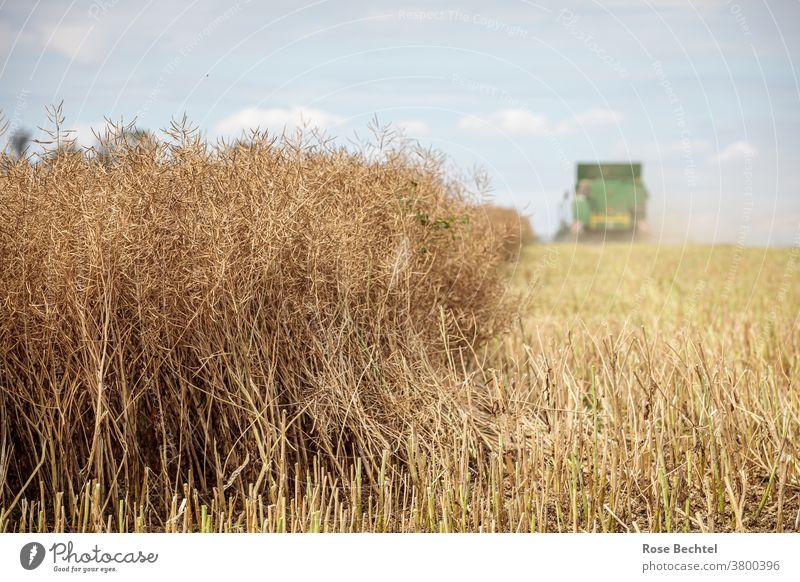 Ernte Rapsfeld Feld Landwirtschaft Landschaft Nutzpflanze Farbfoto Tag Menschenleer Schönes Wetter