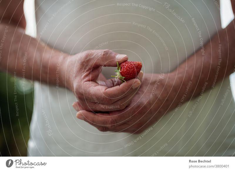 Mann hält eine Erdbeere in der Hand erdbeere Frucht Erdbeeren rot Lebensmittel lecker frisch süß Farbfoto Sommer Gesundheit saftig reif Beeren Nahaufnahme