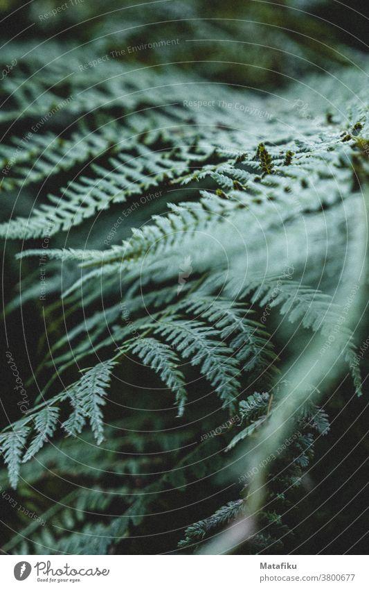 Farnblatt Blatt Flora Pflanze Wald Natur Nahaufnahme Unschärfe Grün Grünpflanze Wildpflanze Menschenleer Im Wald Mood Schwache Tiefenschärfe Umwelt natürlich