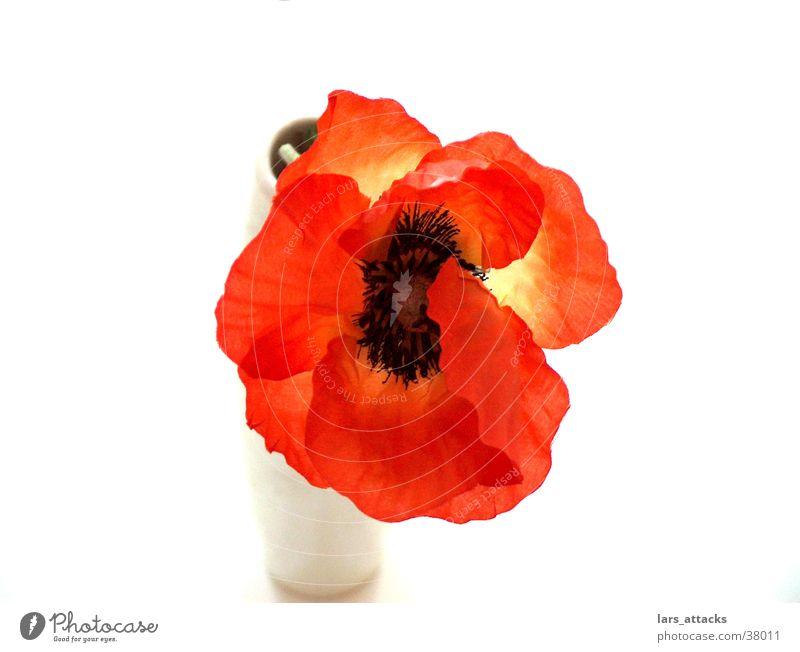 Kunstmohn I Blume Mohn Vase Stil orange gestellt