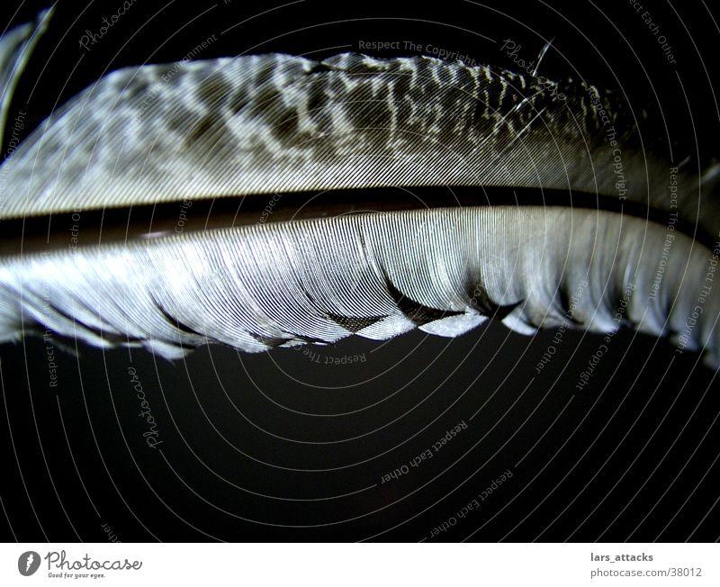 Nachttrofee schwarz Linie Vogel fliegen Feder Indianer