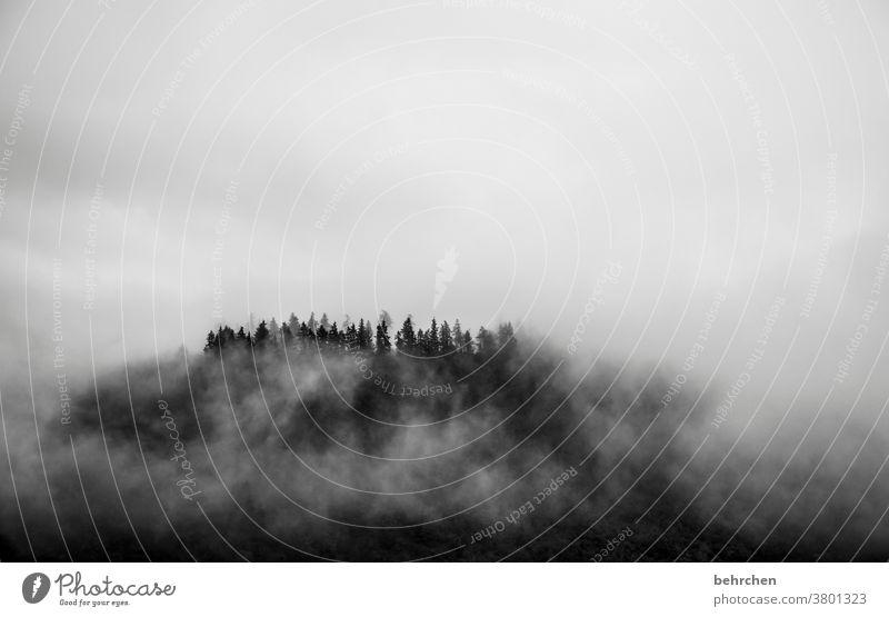 black friday Jahreszeiten herbstlich Herbst Regen Mosel (Weinbaugebiet) Rheinland-Pfalz Hunsrück Moseltal Ruhe Idylle Abenteuer Landschaft Himmel Ferne Ausflug