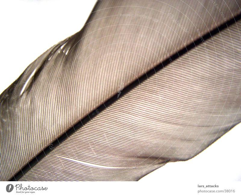 Federlinien durchsichtig braun Vogel Linie Detailaufnahme fliegen Natr