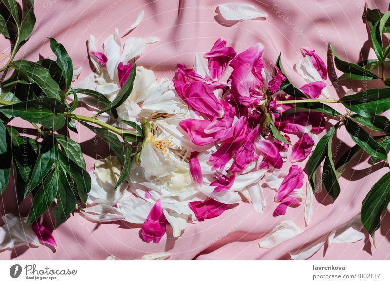 Plateauschicht von verblühten Pfingstrosen auf rosa Drapierung Blume aromatisch Erholung verdorrt Rückzug Frieden Roséwein Windstille sich[Akk] entspannen