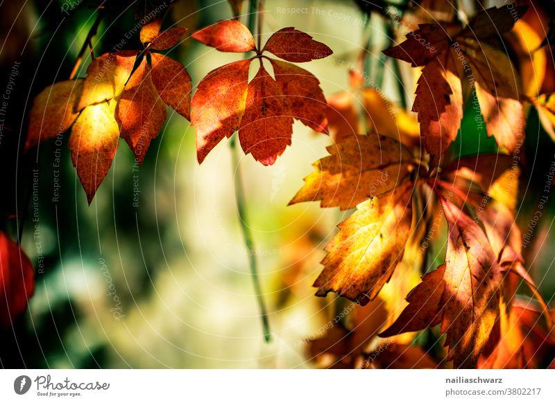 Herbstblätter herbstlich Herbstfärbung Herbstwald Hintergrund Textfreiraum Blätter rot gelb Schwache Tiefenschärfe Outdoor Natur grün Herbstlaub Herbstgefühle