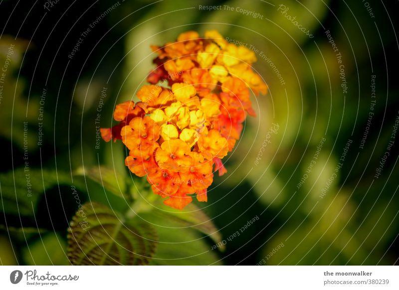 blütenpracht Natur Pflanze Blume Blatt Blüte Grünpflanze Garten gelb grün orange rot Warmherzigkeit schön Farbfoto mehrfarbig Außenaufnahme Nahaufnahme