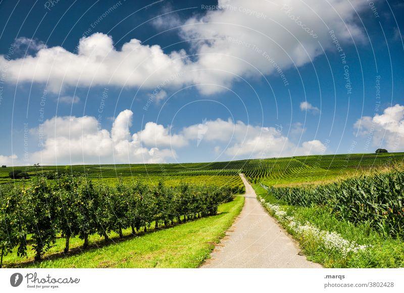 Sommer im Kaiserstuhl Wein Schönes Wetter Natur Landschaft Himmel Wolken Ziel Zukunft Erholung Nutzpflanze Ausflug Wege & Pfade Straße Weinbau Weingut