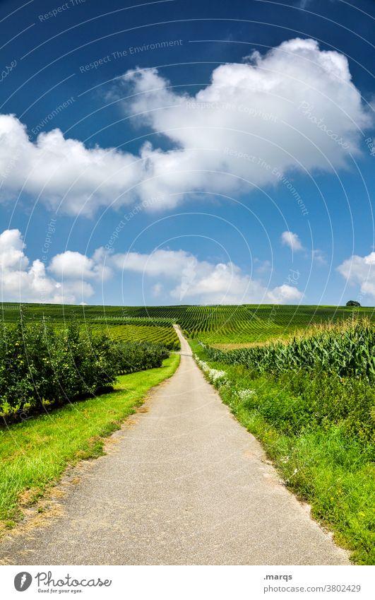 Landweg Kaiserstuhl Sommer Natur Landschaft Himmel Wolken Schönes Wetter Wein Ziel Zukunft Tourismus Feld Nutzpflanze Weinbau Wege & Pfade Straße Ausflug