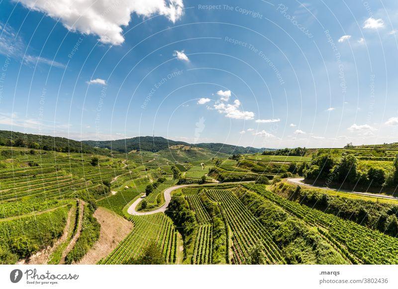Kaiserstuhl Natur Landschaft Sommer Schönes Wetter Erholung Himmel Weinberg Horizont Weinbau Terrassenfelder Feld Straße wandern Tourismus Aussicht Stimmung