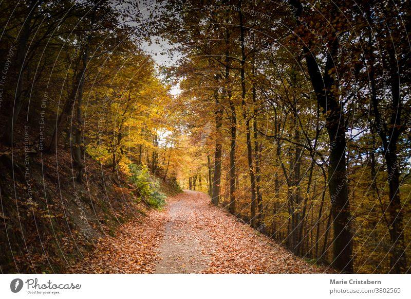 Schöne Herbstfarben im Wald Herbststimmung Herbstsaison keine Menschen filmischer Look Kino-Stimmung der Weg nach vorn ätherisch verträumt geheimnisvoll fallen