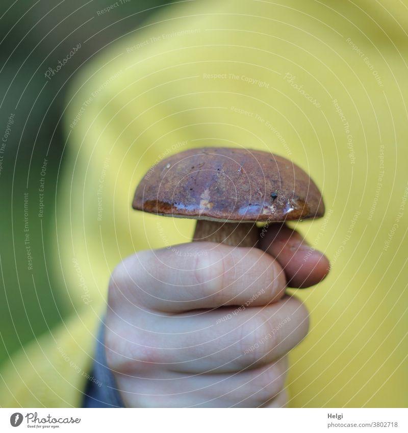 Pilz gefunden - Kind in gelber Jacke hält einen Maronenröhrling in der Hand Speisepilz essbar lecker Finger festhalten Nahaufnahme Farbfoto Außenaufnahme Herbst