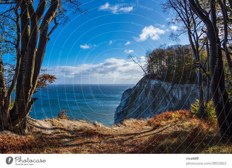 Kreidefelsen an der Ostseeküste auf der Insel Moen in Dänemark Küste Meer Mons Klint Herbst Møn Mön Landschaft Natur Steine Felsen Strand Bäume Steilküste