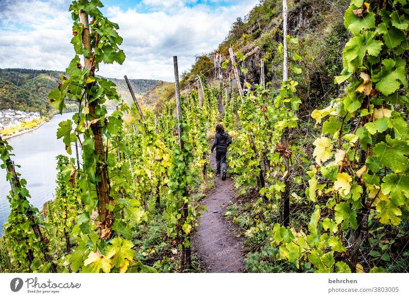 knapp daneben | wächst wein grün Landwirtschaft Freiheit Ferne Berge u. Gebirge Wolken Umwelt Schönes Wetter Ausflug Tourismus Ferien & Urlaub & Reisen wandern