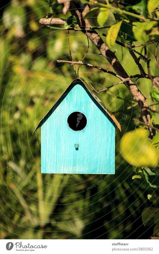 Aquablaues Metall-Vogelhaus hängt an einem Zitronenbaum Futterhäuschen blaues Vogelhaus Haus aqua Baum farbenfroh tropisch Natur Wartehäuschen Tierwelt