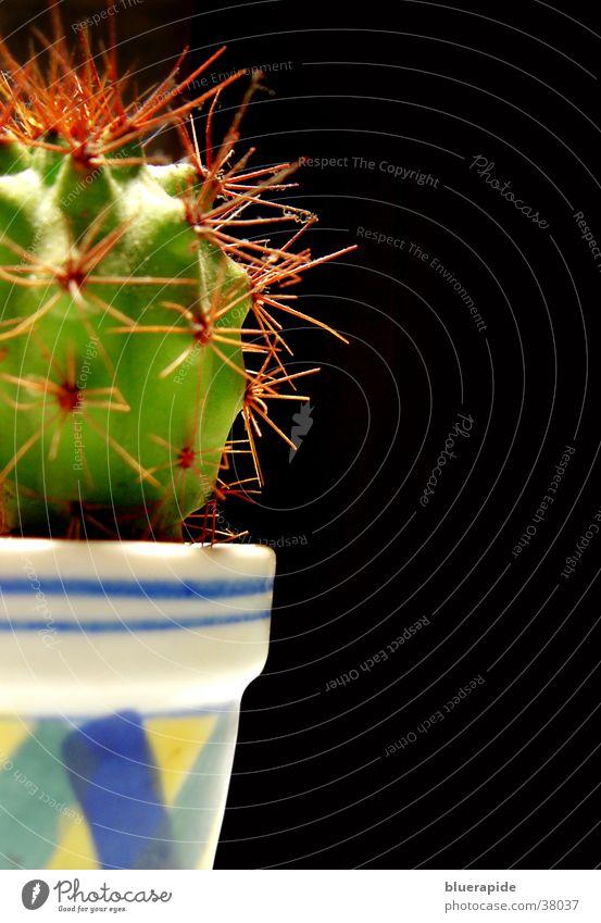 klein aber oho rot Topf Kaktus Stachel stachelig