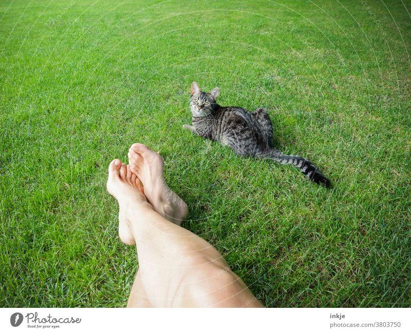 grüne Wiese mit blassen Beinen und getigerter Katze Farbfoto Außenaufnahme Rasen Garten Haustier Frauenbeine liegen Sommer Warm Faulenzen liegen Pause Freizeit