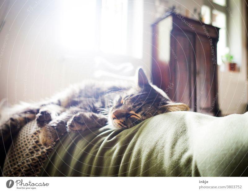 Schlafende Katze auf Frauenbauch im Gegenlicht. Farbfoto Zuhause Innenaufnahme Wohnzimmer Grün Herbstfarben gemütlich Weich Warm Kuschlig Wohlgefühl Vertrauen