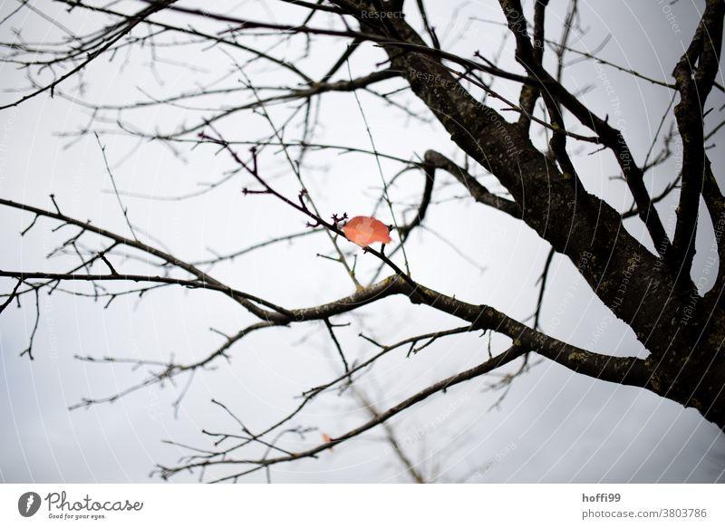 ein letztes Blatt in herbstlicher Färbung verweilt am Baum im düsteren Nachmittagslicht Herbst Herbstlaub Herbstwetter Herbstfärbung Natur Pflanze Herbstwald