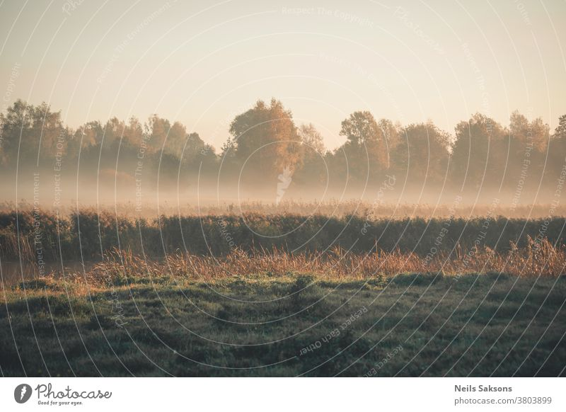 Ort, an dem ich am goldenen Morgen lebe heimwärts Landschaft Wiese Fluss Buchse Wald Baum Bäume Gras Nebel grün Saison Natur schön natürlich Hintergrund Umwelt