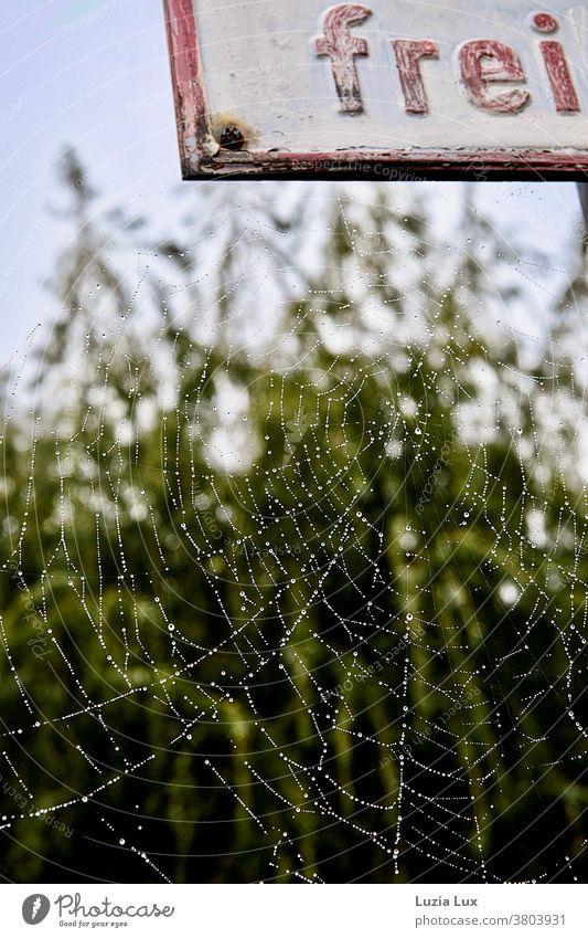 Ein Spinnennetz voller winziger Tautropfen, malerisch an einem rostenden Schild Reiftropfen silbern zart Netz Nahaufnahme Wassertropfen Natur Außenaufnahme