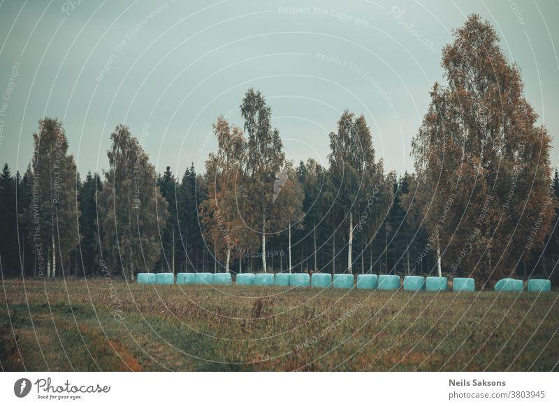 Herbstanfang auf lettischer Wiese mit Heuröllchen aus Plastik Wald Bäume Wälder Oktober fallen golden Blätter Herbstlaub Natur farbenfroh Laubwerk orange Baum