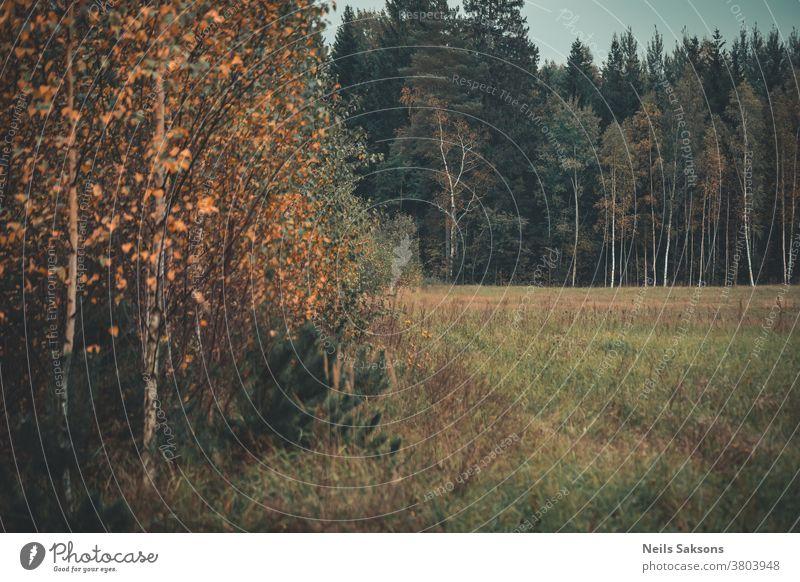 Herbstanfang im lettischen Wald Bäume Wälder Wiese Oktober fallen golden Blätter Herbstlaub Natur farbenfroh Laubwerk orange Baum natürlich schön Hintergrund