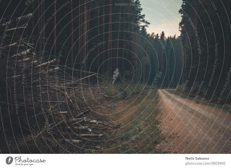 einsame kurvenreiche Landstraße in Nadelwäldern mit Birkenzweigen auf einer Seite Rüssel Moos Wald Außenaufnahme Landschaft Farbfoto Tag Baum Menschenleer