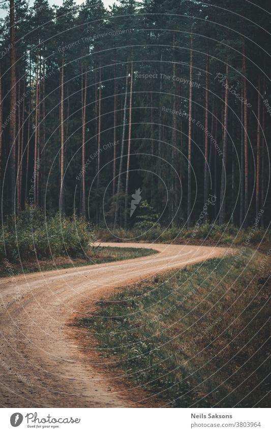 einsame kurvenreiche Landstraße in Nadelwäldern Rüssel Moos Wald Außenaufnahme Landschaft Farbfoto Tag Baum Menschenleer Umwelt Natur Pflanze grün Licht
