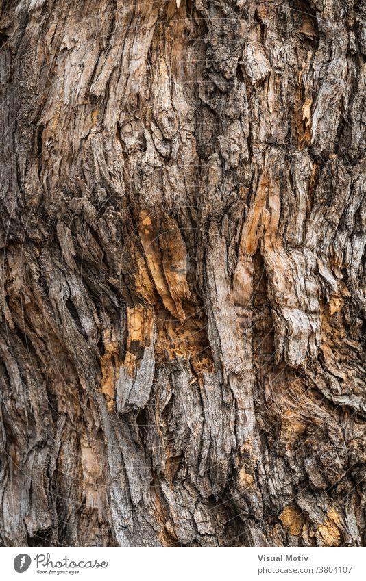 Textur der Rinde von Styphnolobium japonicum, allgemein bekannt als Pagodenbaum Kofferraum Baum Hintergrund Oberfläche Flora alt Natur Holz gealtert Botanik