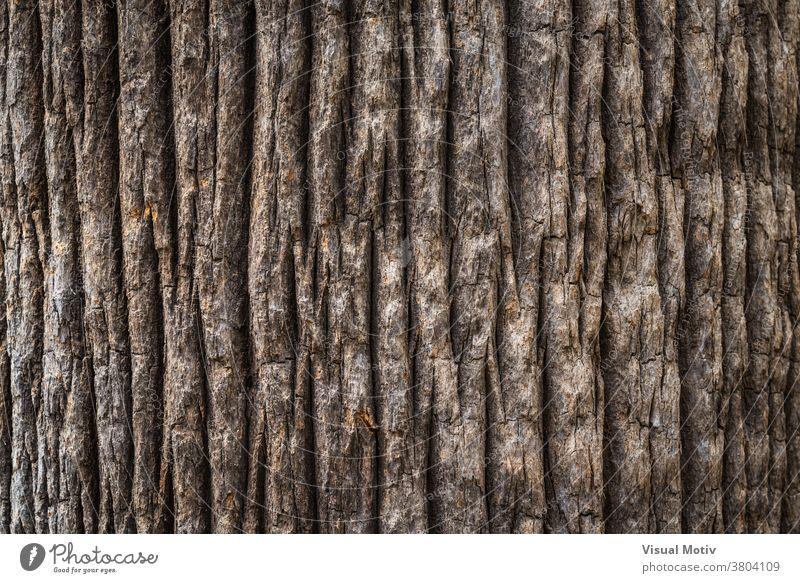 Rindentextur des breiten Stammes einer kalifornischen Fächerpalme Textur Kofferraum Handfläche Baum Hintergrund Oberfläche Flora alt Natur Holz gealtert Botanik