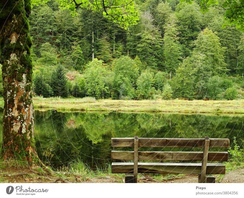 Am Weiher (2) Einsamkeit Ruhe Bank Wasseroberfläche Spiegelung im Wasser Waldrand stille Schwarzwald Naturschutzgebiet Erholungsgebiet Pause Baumstamm grün