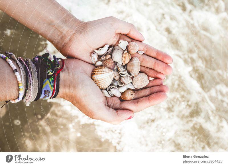 Hände mit Muscheln im Meer Strand Natur Nahaufnahme Panzer MEER Sand Hand Sommer das Meer Feiertag Granate in der Hand Meeresleben Sonne Leben Finger idyllisch