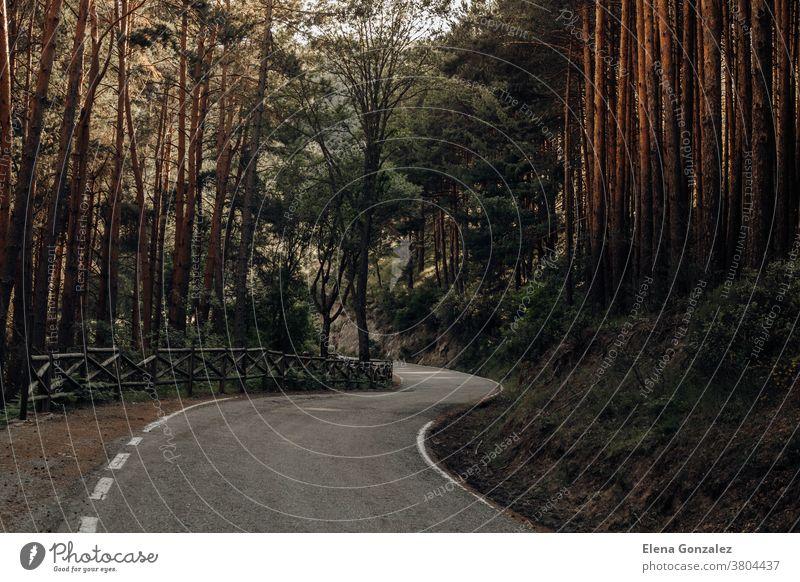 Straße zwischen Kiefern in den Bergen im Norden Spaniens Autobahn Wald Himmel Asphalt Landschaft Baum Natur reisend Berge u. Gebirge Bäume grün Bäuerin