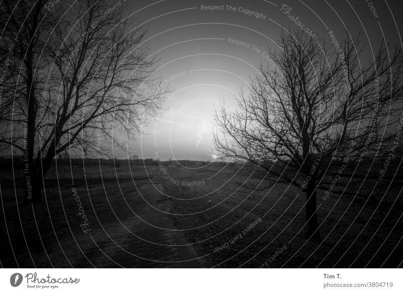 Evening mood in Ukraine b/w Einsamkeit ruhig Schwarzweißfoto b&w B&W dunkel B/W Landschaft - Natur Licht Baum Abenddämmerung Sonnenlicht Tschernobyl