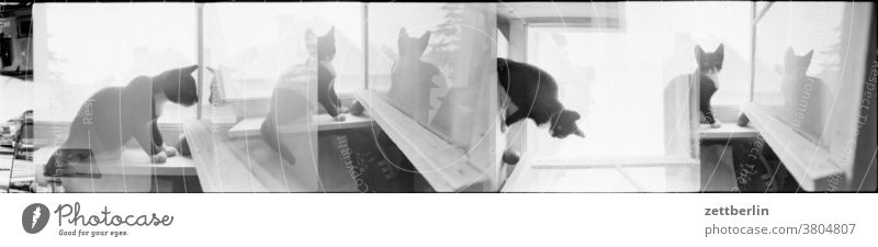 Katze mit defektem Filmtransport katze tier haustier fenster raum zimmer mansarde dachstübchen dachstube bank sitz wand fensterflügel offen lüftung lüften