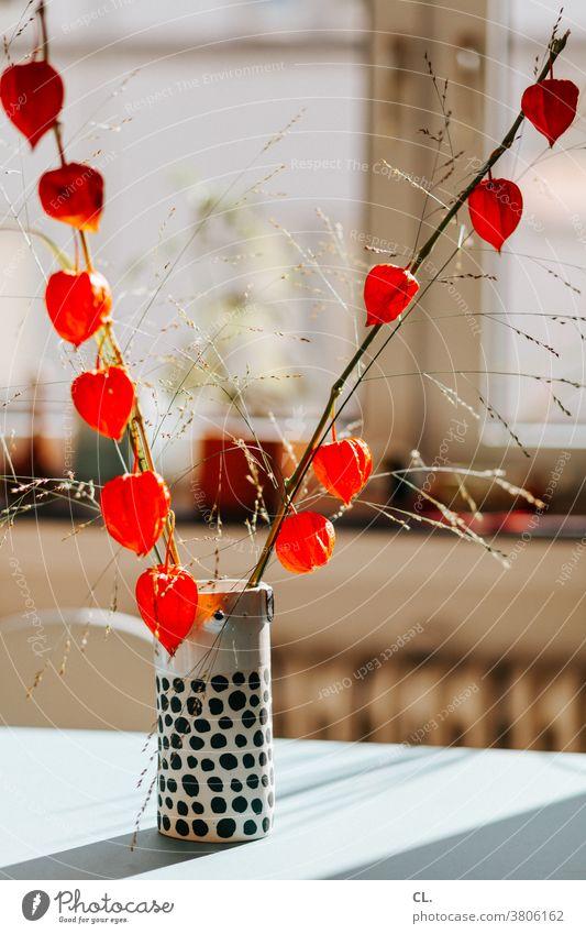 lampionblume Lampionblume Physalis Blüte Blume Kapstachelbeere Pflanze Dekoration & Verzierung orange Herbst Vase Tisch zuhause Blühend Wohnung