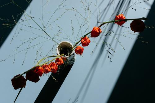 lampionblume Lampionblume Physalis Blüte Vase Kapstachelbeere Tisch Pflanze Dekoration & Verzierung orange Blume Herbst zuhause Nahaufnahme Detailaufnahme