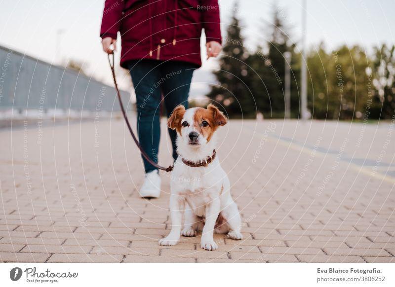Frau in der Stadt beim Spaziergang mit ihrem entzückenden Jack-Russell-Hund. Lebensstil im Freien allergisch Herbst Pflege Kaukasier Großstadt Textfreiraum