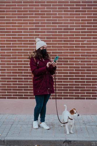 Frau, die eine Schutzmaske trägt, ein Mobiltelefon benutzt und mit ihrem entzückenden Hund Jack Russell durch die Stadt spaziert. Lebensstil im Freien