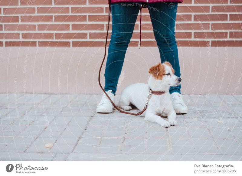 Frau in der Stadt mit ihrem entzückenden Jack-Russell-Hund. Lebensstil im Freien bezaubernd Herbst Backsteinwand Bulldogge Freizeitkleidung Kaukasier heiter