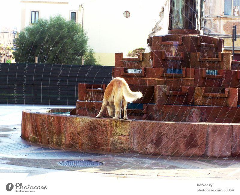 Hundenapf Wasser braun trinken Brunnen Schönes Wetter