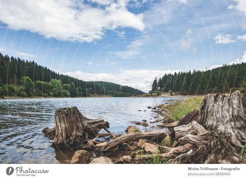 Talsperre Lütsche / Thüringen Thüringer Wald See Wasser Wurzel Stein Landschaft Natur wandern Camping Ferien & Urlaub & Reisen Himmel Wolken Baum Erholung